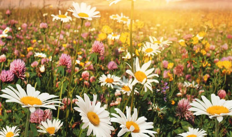 Preguntas y respuestas sobre la dermocosmética natural